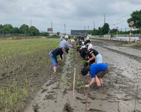 自然との触れ合いの機会が少なくなってきている今の子どもたちにとって泥に触れる経験はとても貴重で食育にもつながる大変有意義な時間でした。